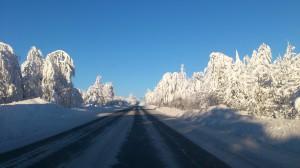 1 деревья в снегу