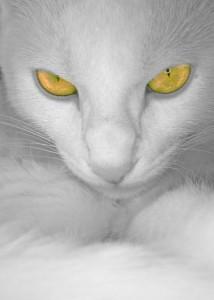 б кот