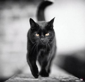 ч кот