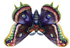 бабочка вниз